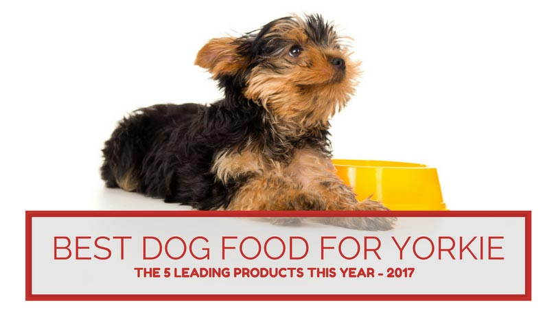 Best Dog Food For Yorkie The Five Leading Products This Year 2017