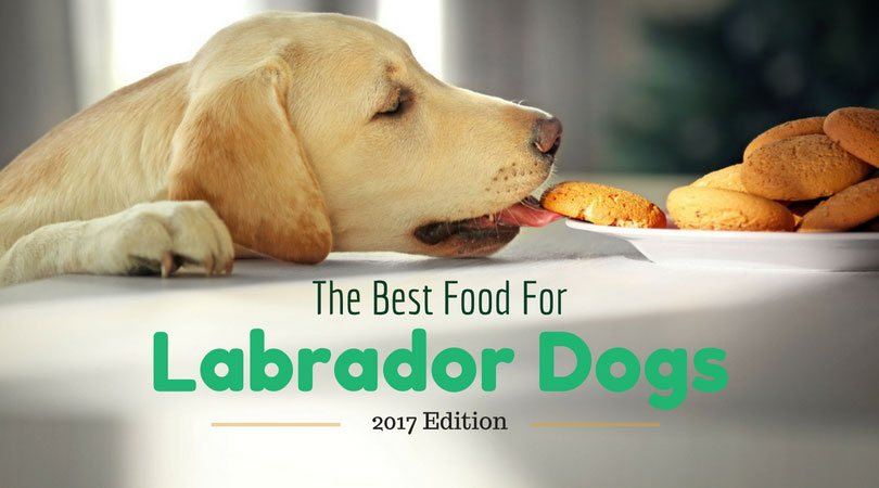 best food for labrador