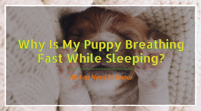 puppy breathing fast while sleeping