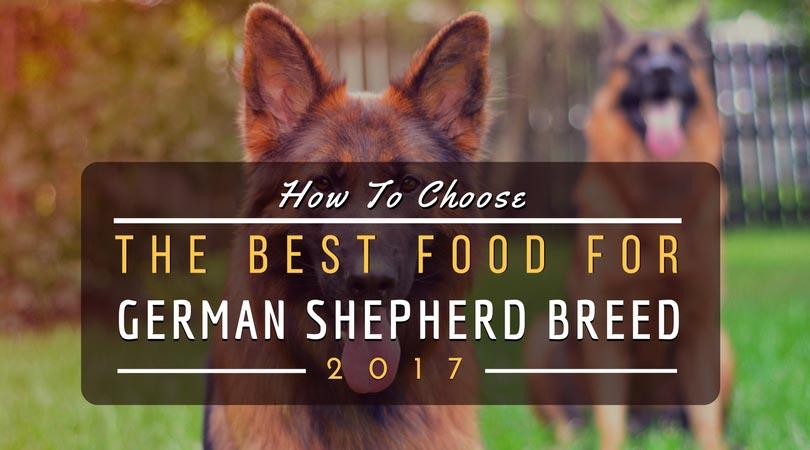 Best Food For German Shepherd Breed