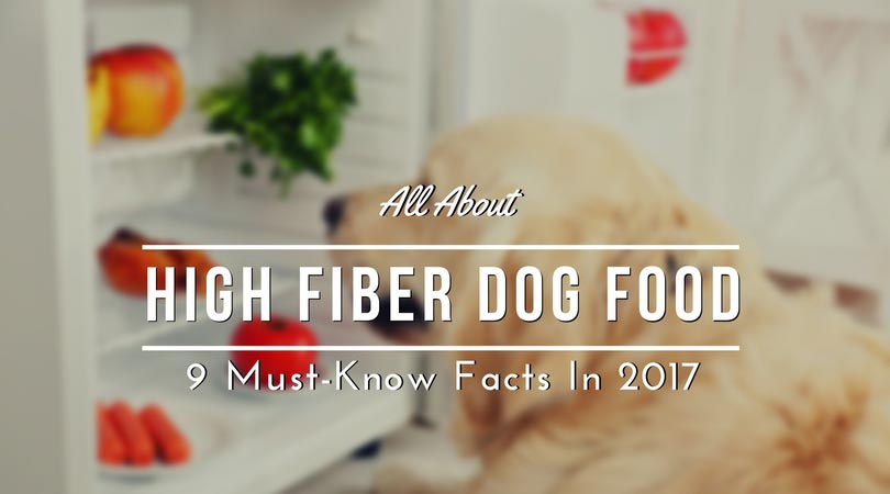 All About High Fiber Dog Food