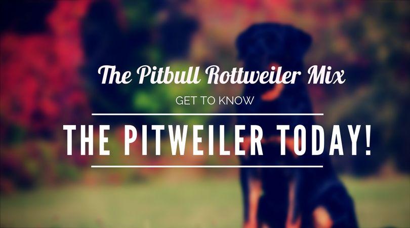 Pitbull Rottweiler Mix