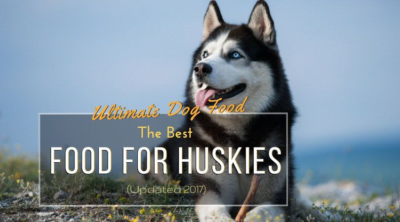 Ultimate Dog Food The Best Food For Huskies Updated 2017