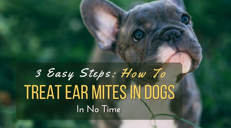 3 Easy Steps: How To Treat Ear Mites In Dogs In No Time ...
